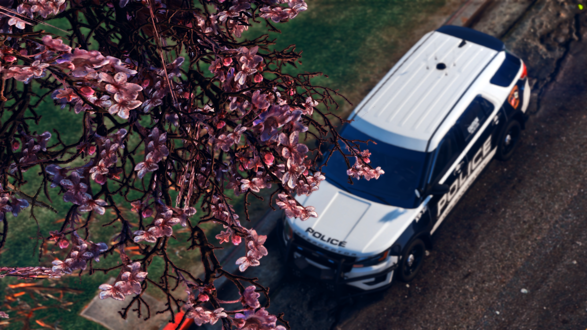 Cherry Blossoms need more love in GTA
